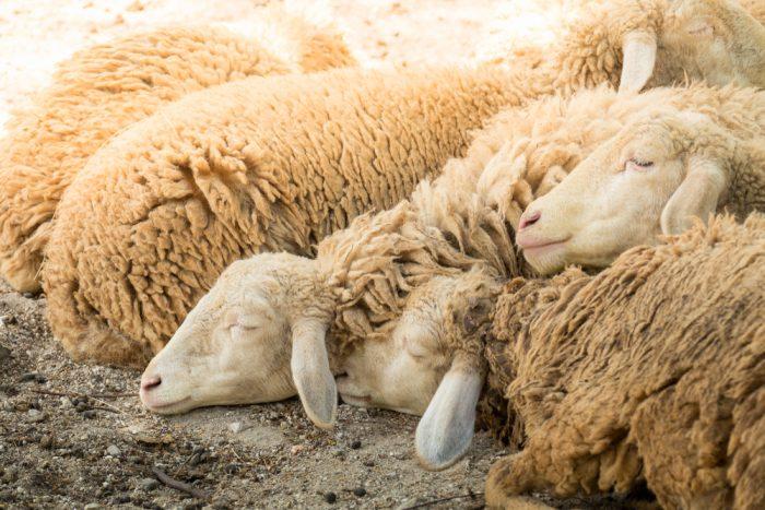 My Personal Shepherd4 min read