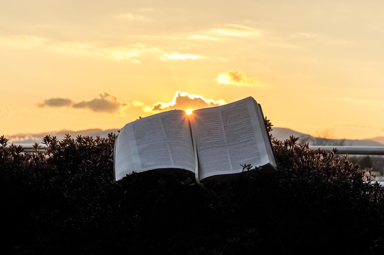 Lea la Biblia en un año : 219º día11 min read